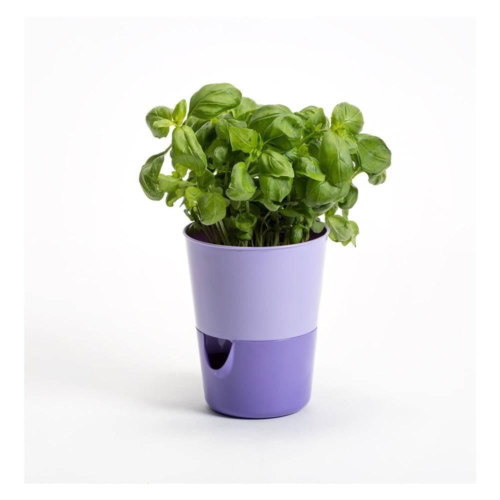 Plastia Levanduľovo-fialový samozavlažovací kvetináč Plastia Rosmarin